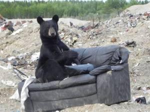 Bear No 2