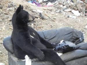 Bear no 3
