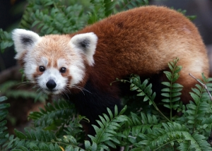 rusty-panda-hmed-1245p.photoblog600