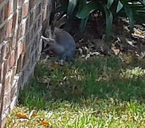 Spot the rabbit